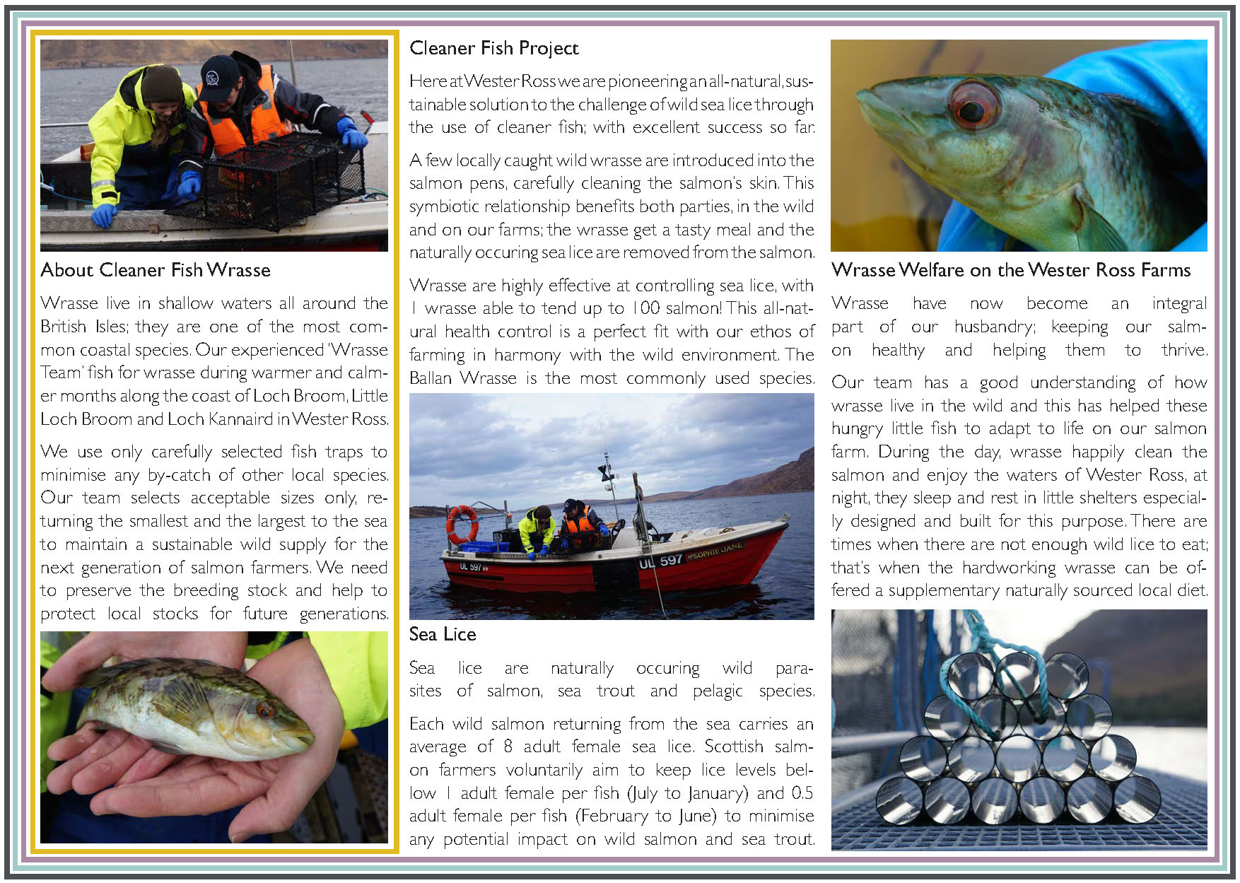 wrasse leaflet 2018 UK final downsized_Page_2.jpg