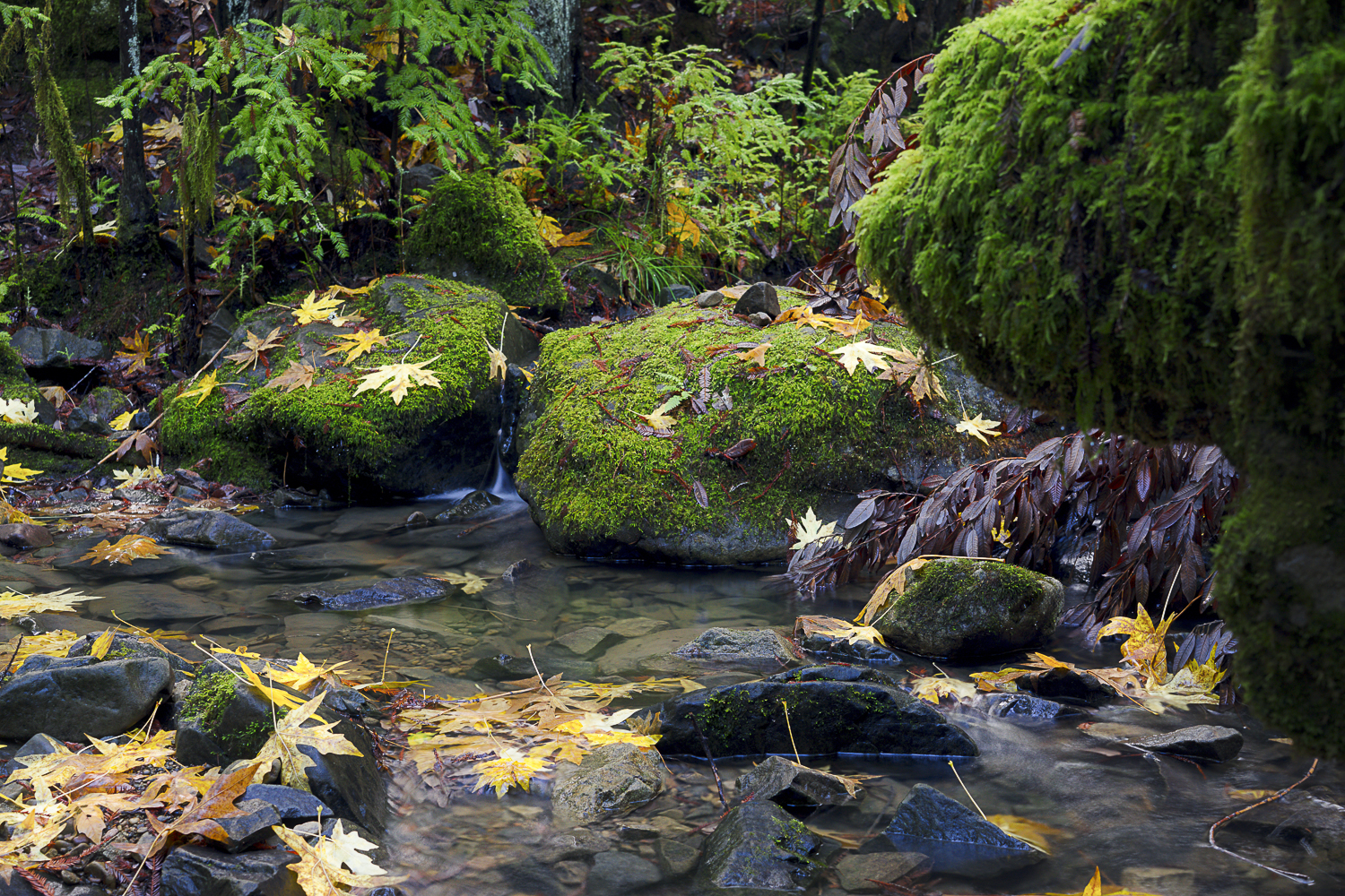Montgomery Creek, Montgomery Woods State Nature Reserve, Mendocino County