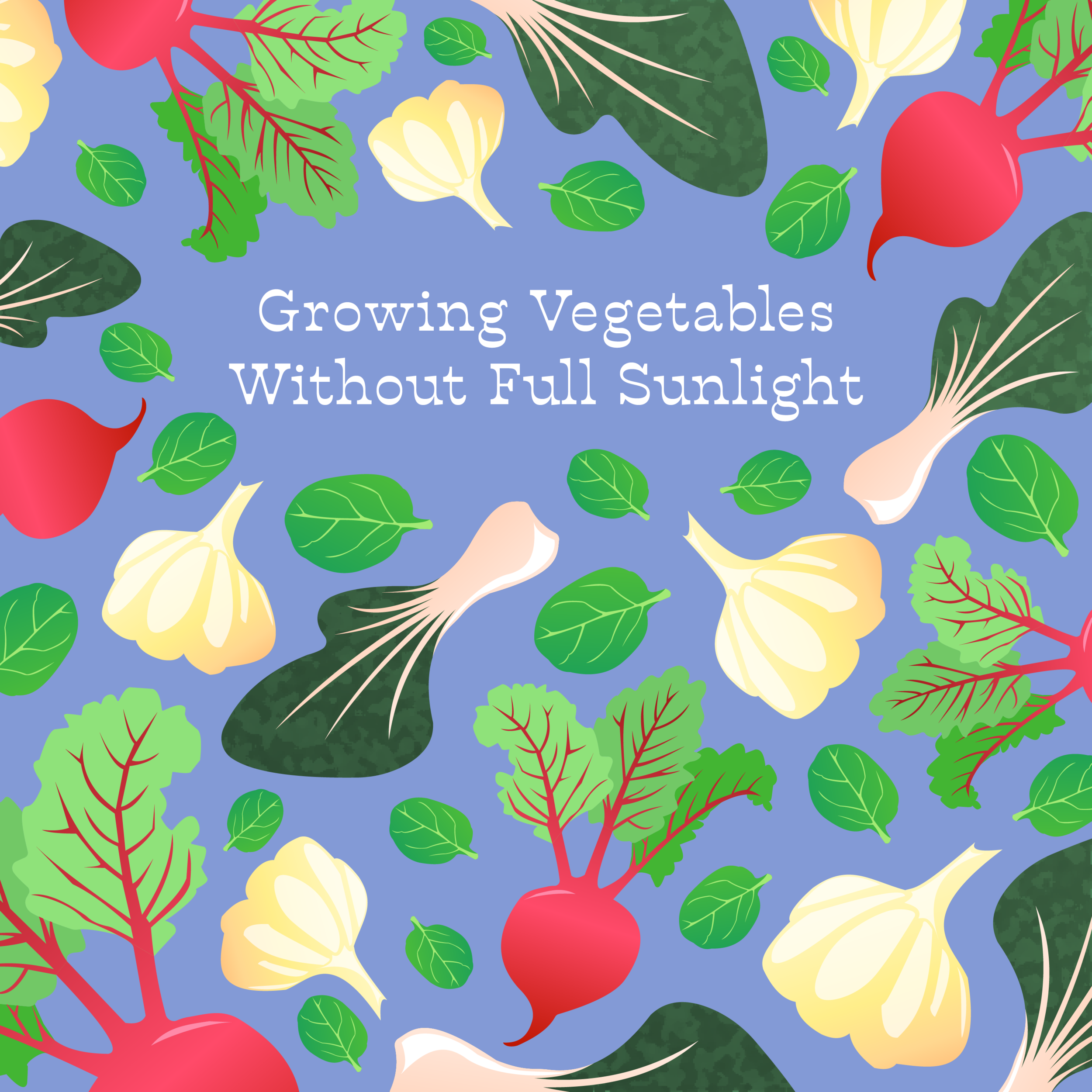 Growing Vegetables Without Full Sunlight - 2019   Adobe Illustrator