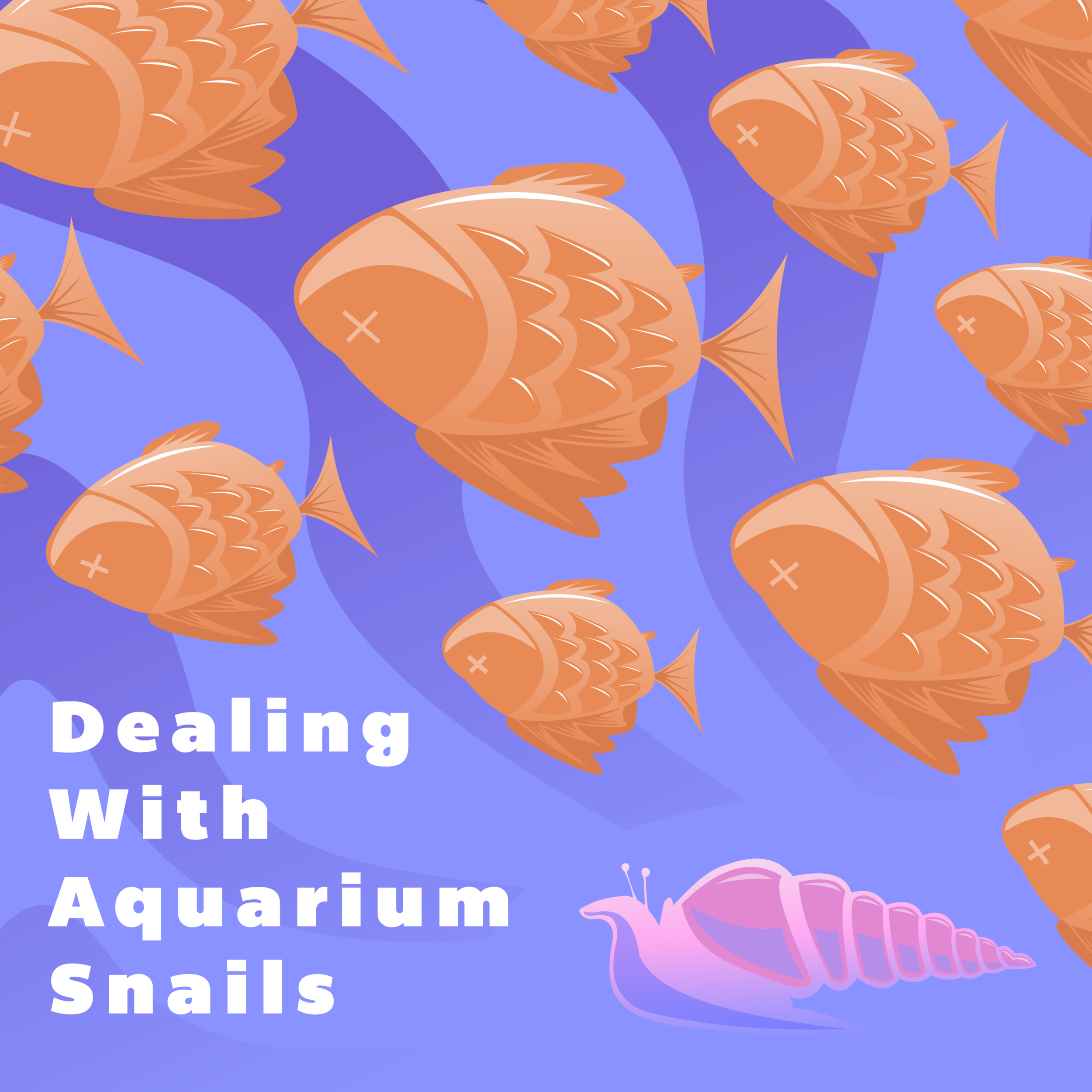 Dealing With Aquarium Snails - 2019   Adobe Illustrator