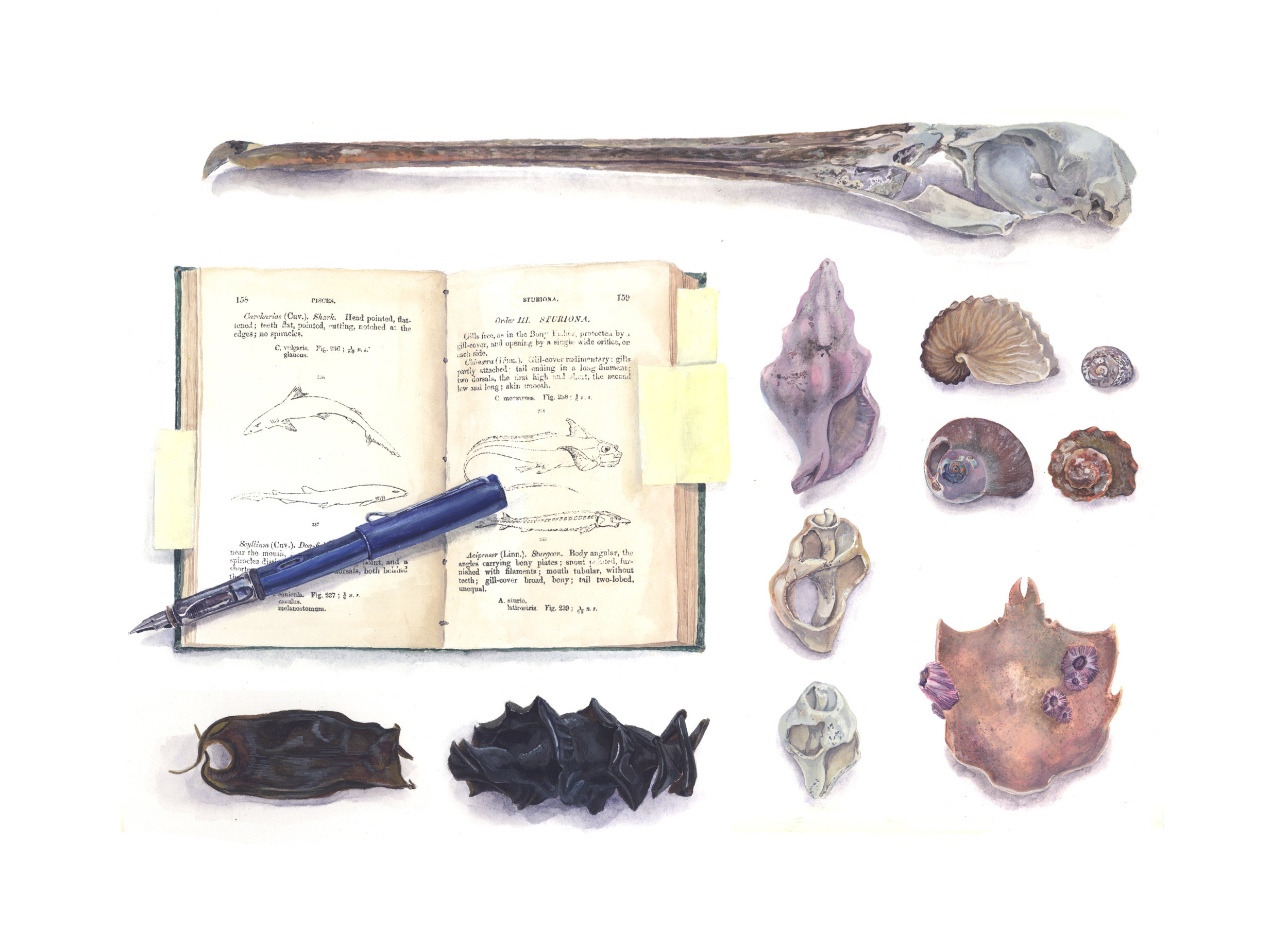 Beach Combing Treasures