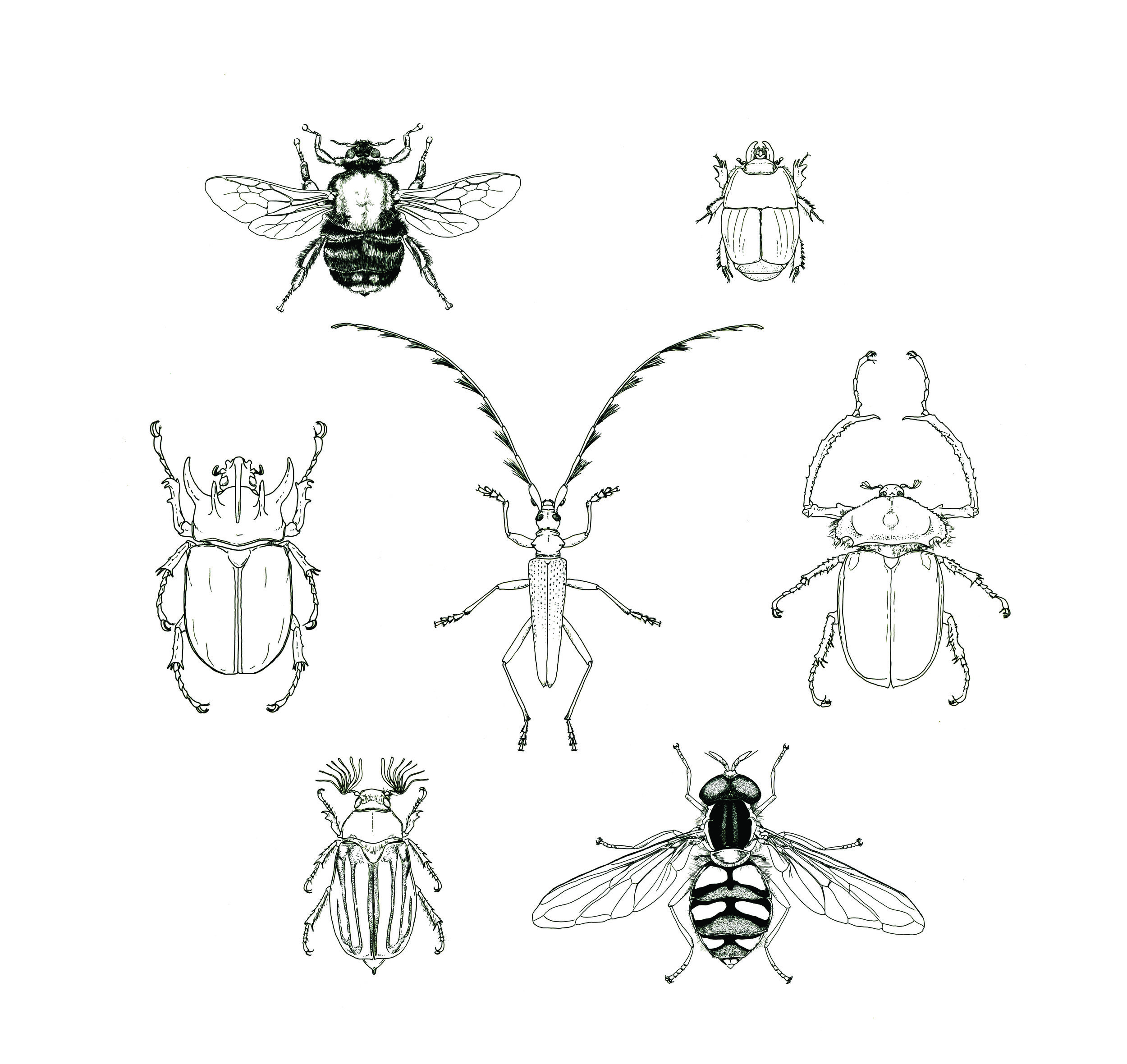 Pen and Ink Spot Illustrations