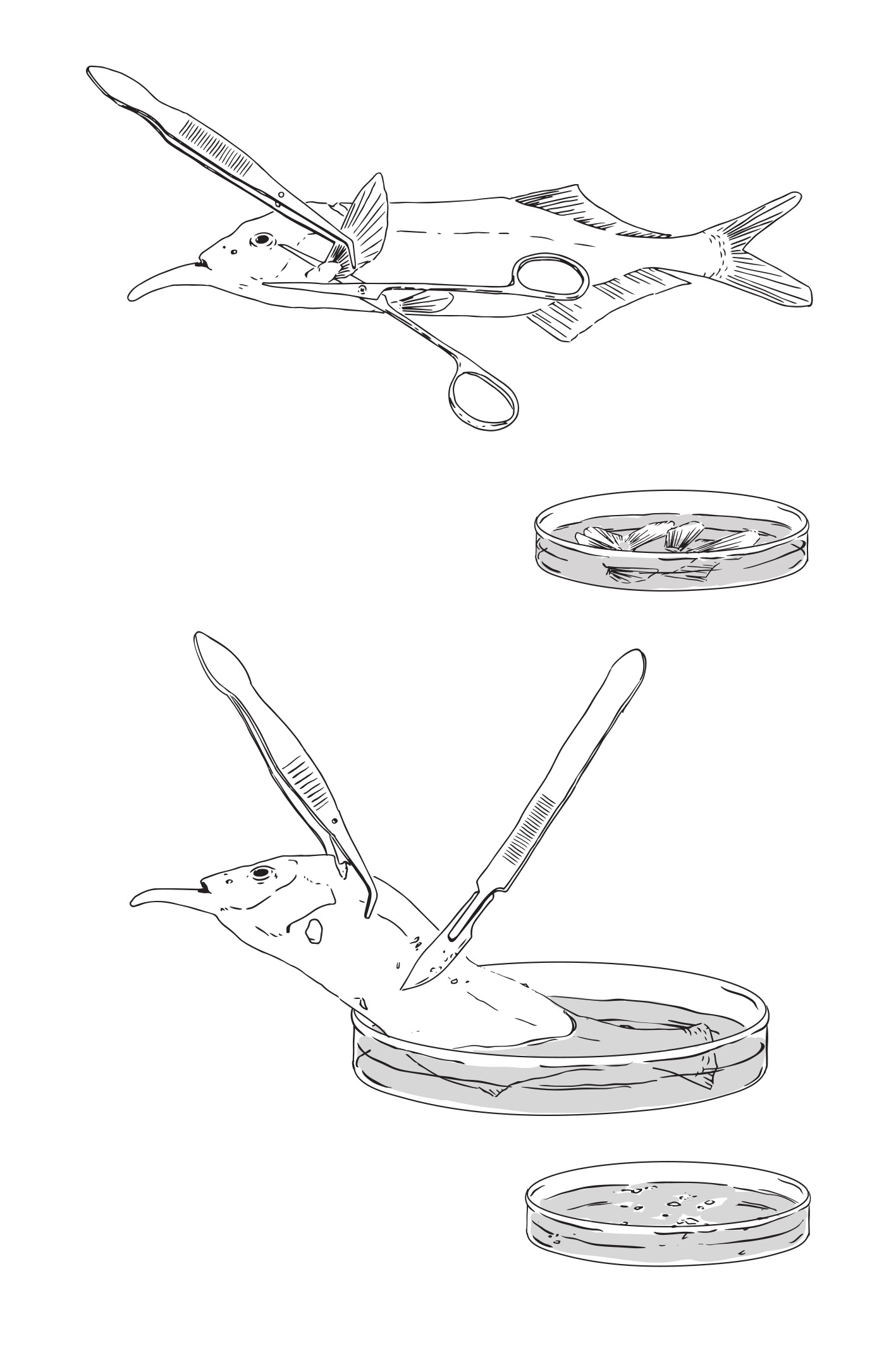 Monogene dissection-1.jpg