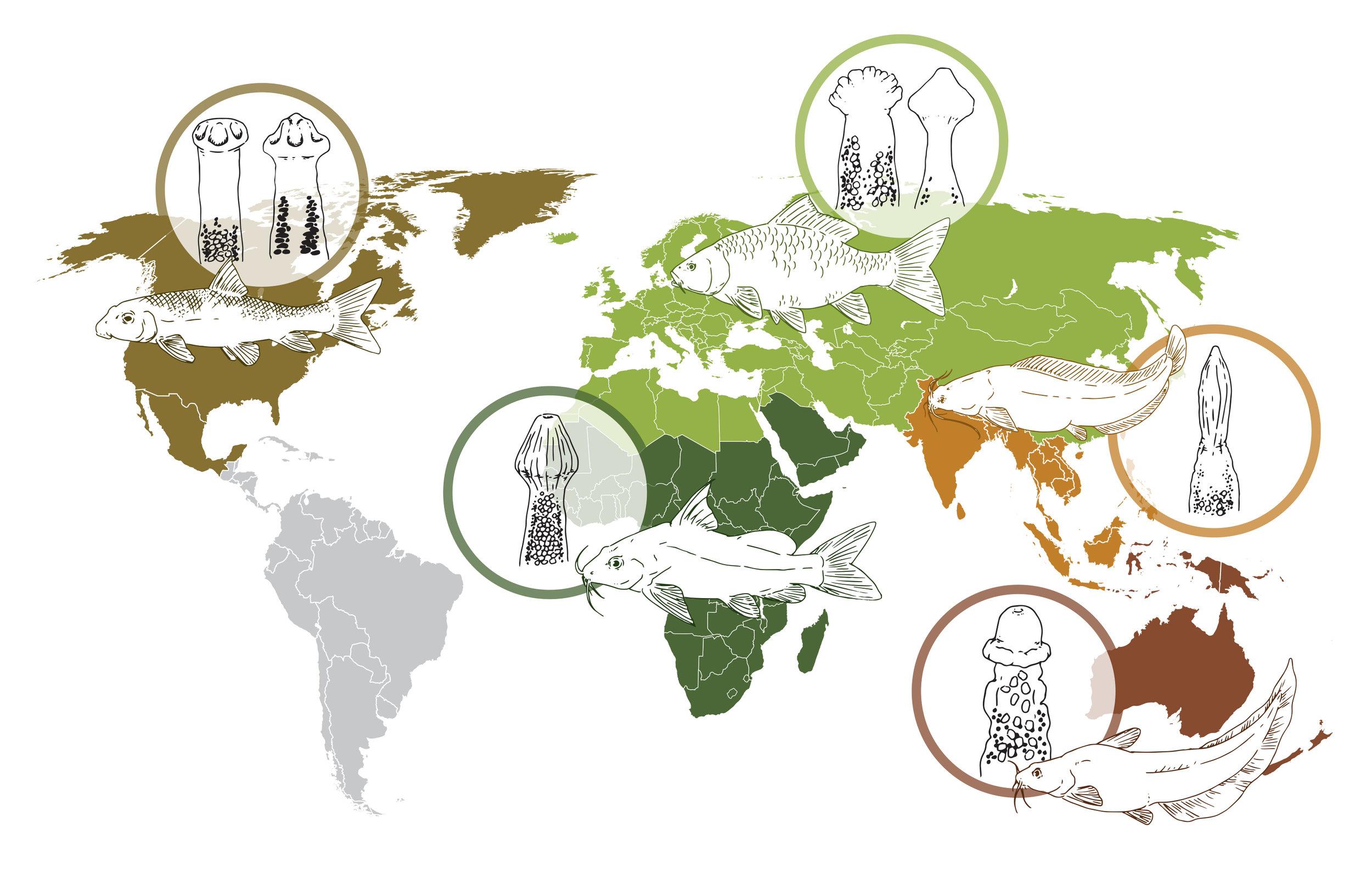 Distribution map.jpg