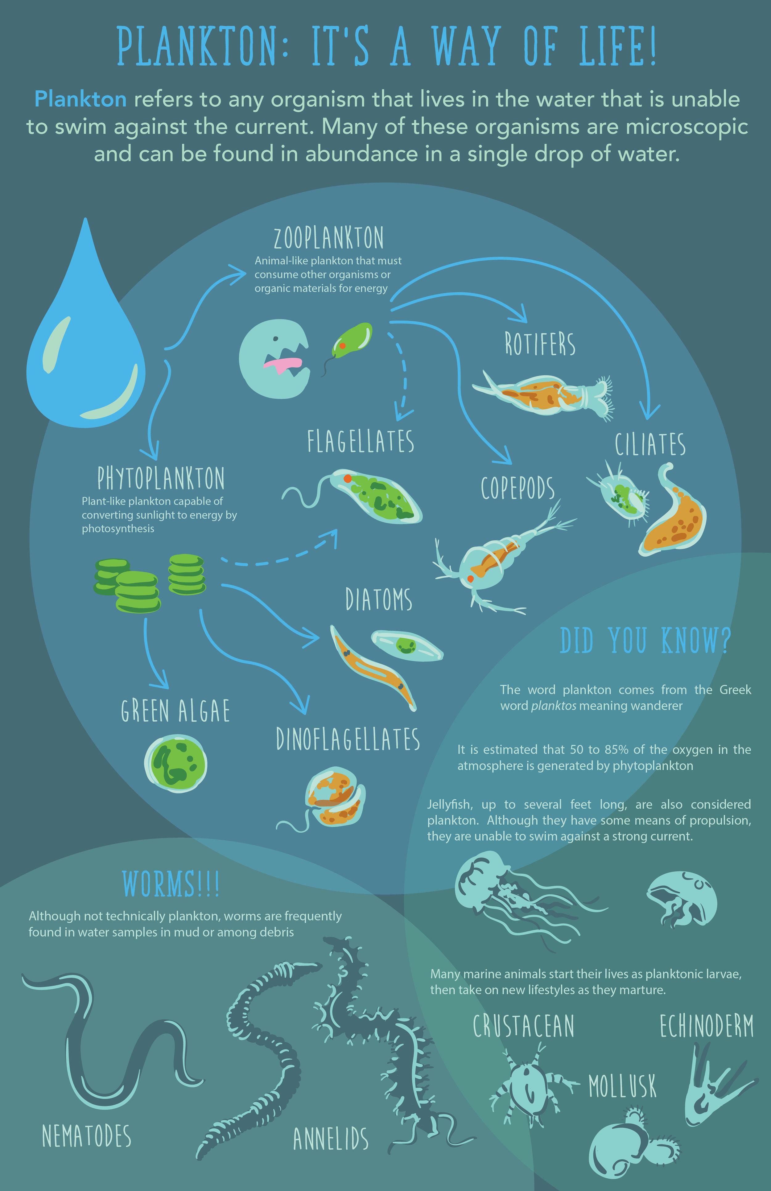 plankton infograph-01.jpg