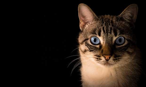 cat_pacto-visual-unsplash_620.jpg