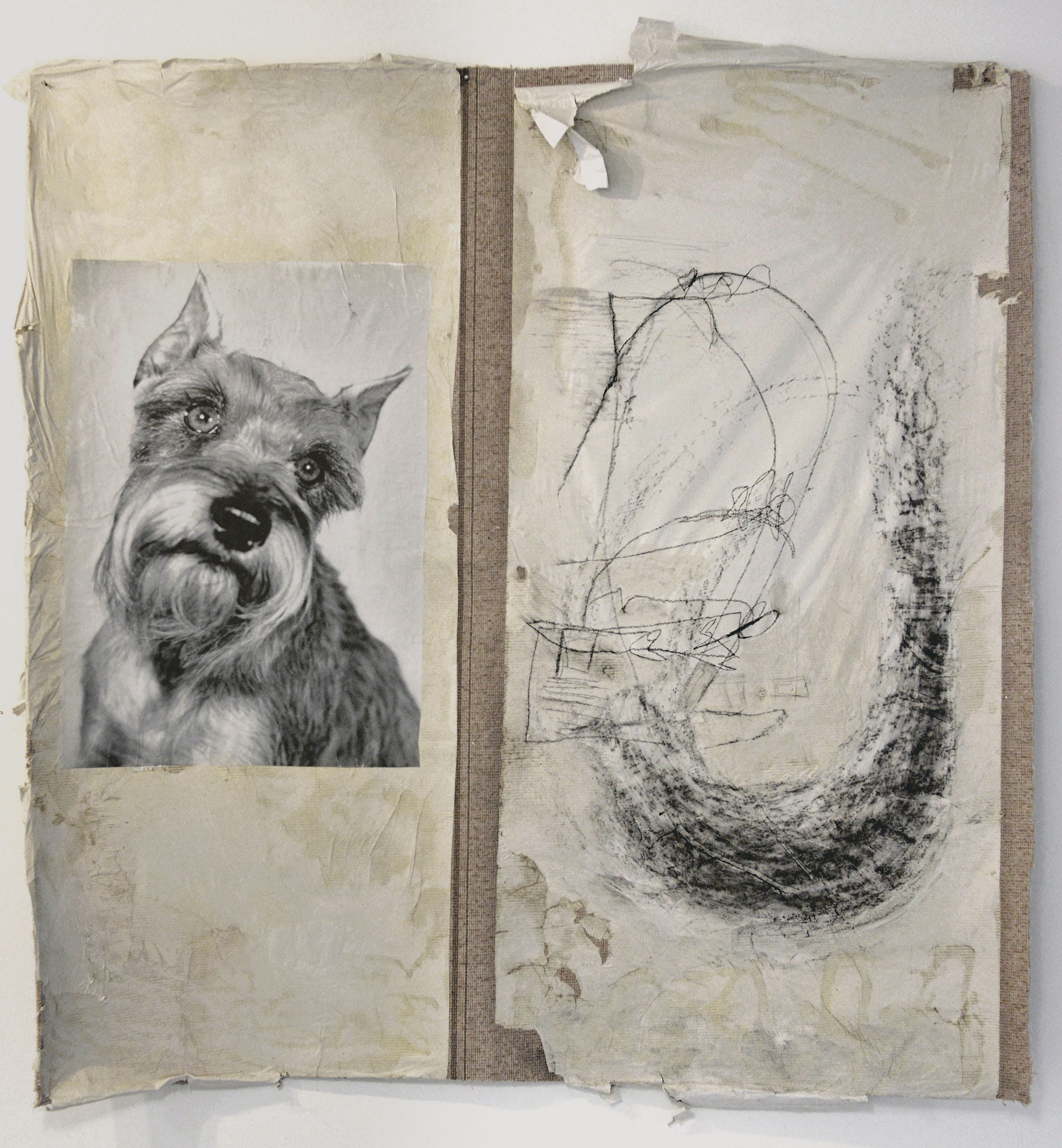 """Idiotic and Profound: The Schnauzer     reproduced image, charcoal, and paper on carpet    90"""" x 70"""""""