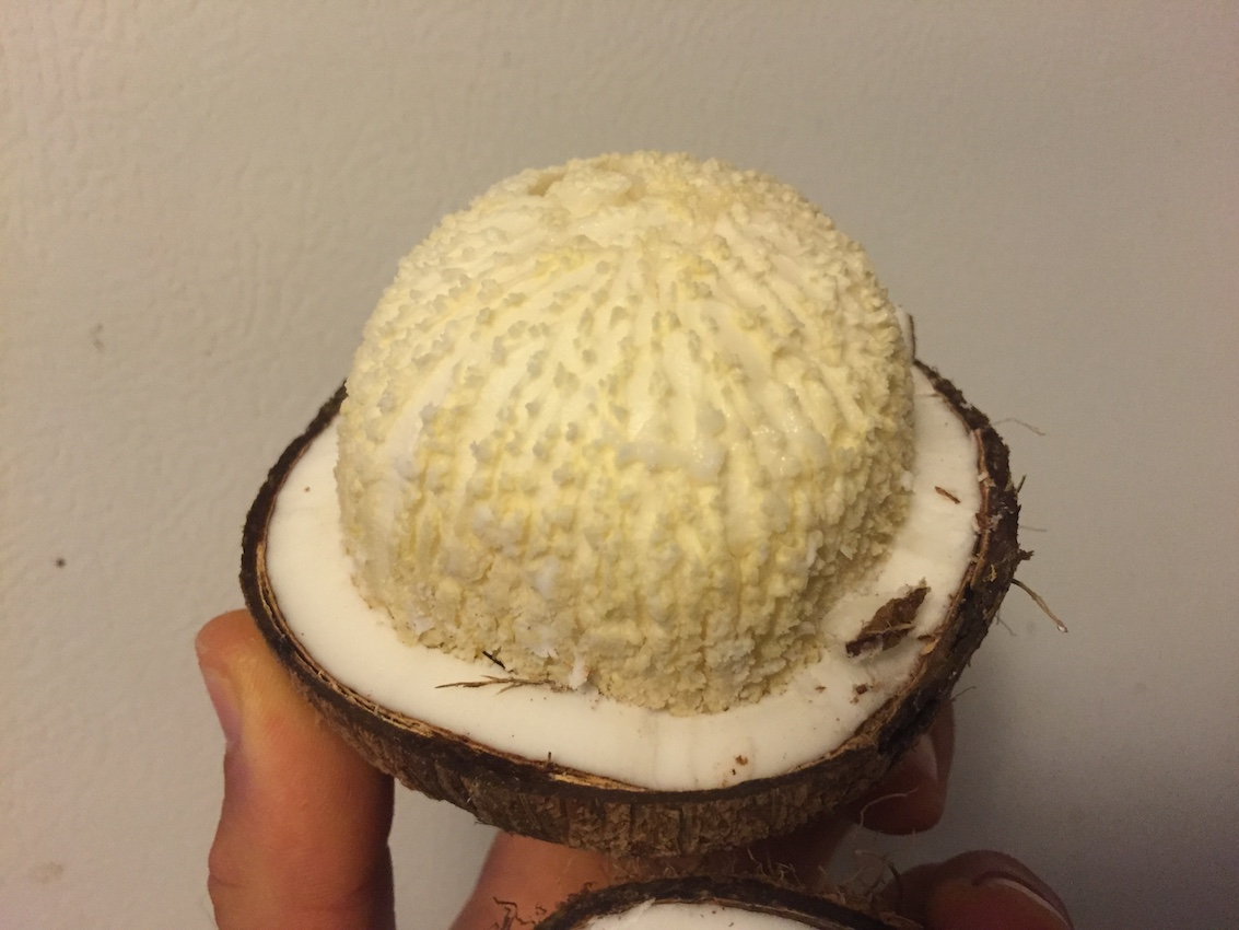 Sprouted Coconut is one of my favorite foods on the planet.