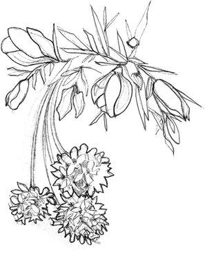 Bespoke+bridal+illustration+Millie+Wilkins.jpg