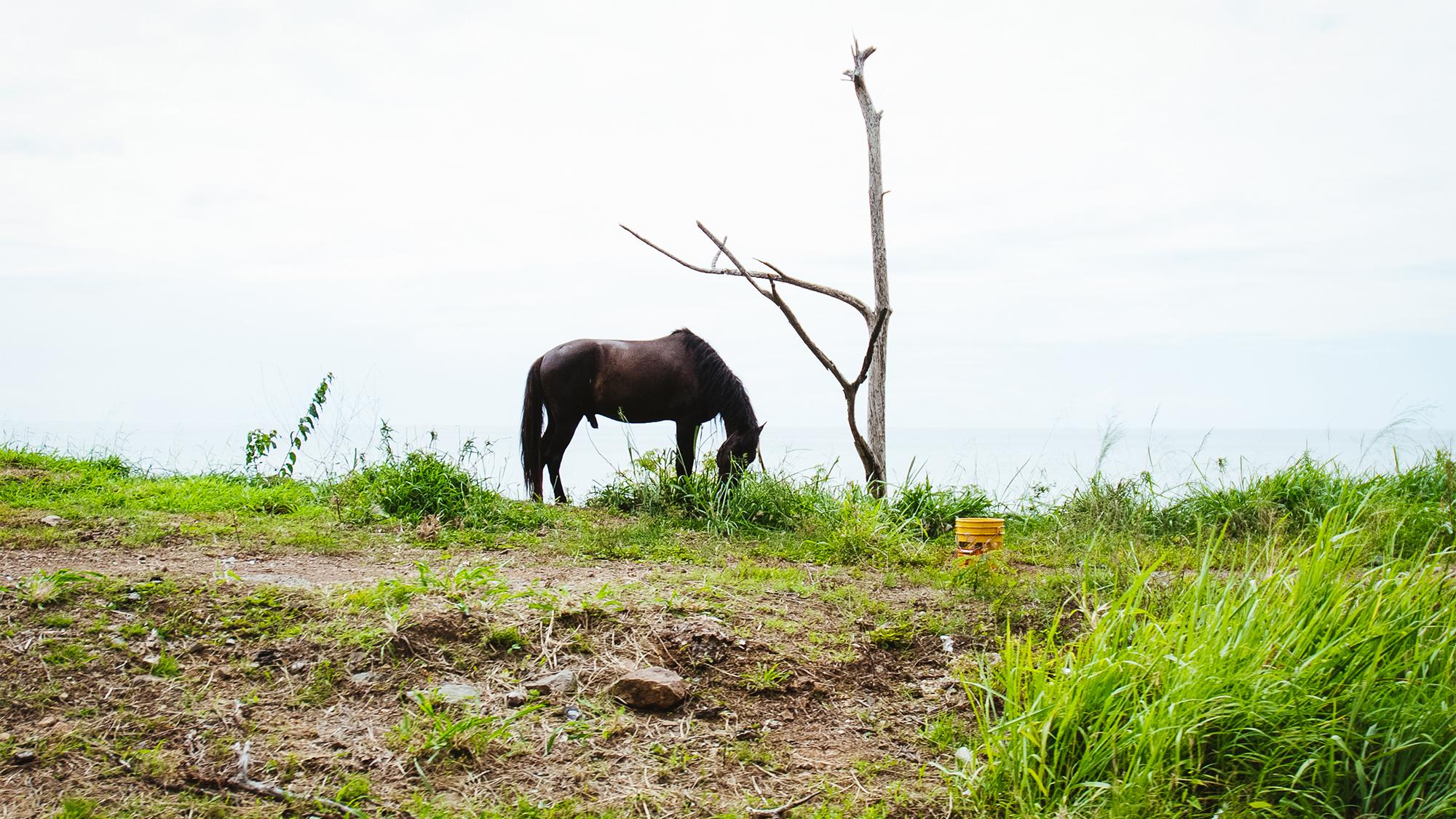 caballoweb.jpg
