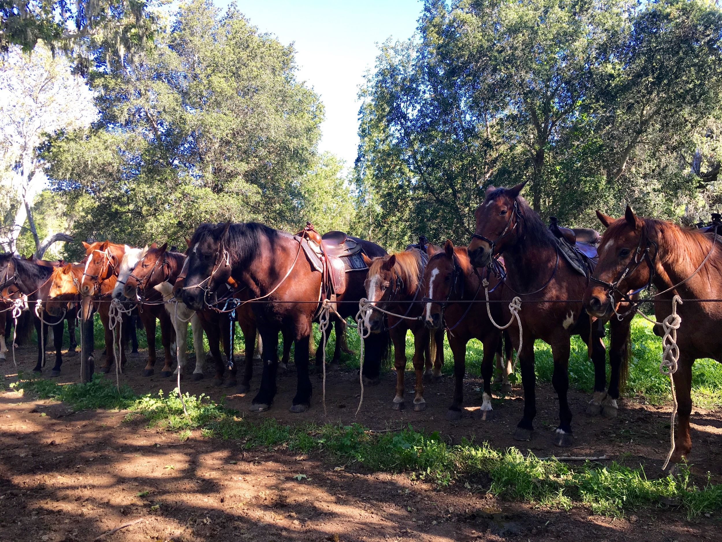 Alisal Guest Ranch and Resort Horses