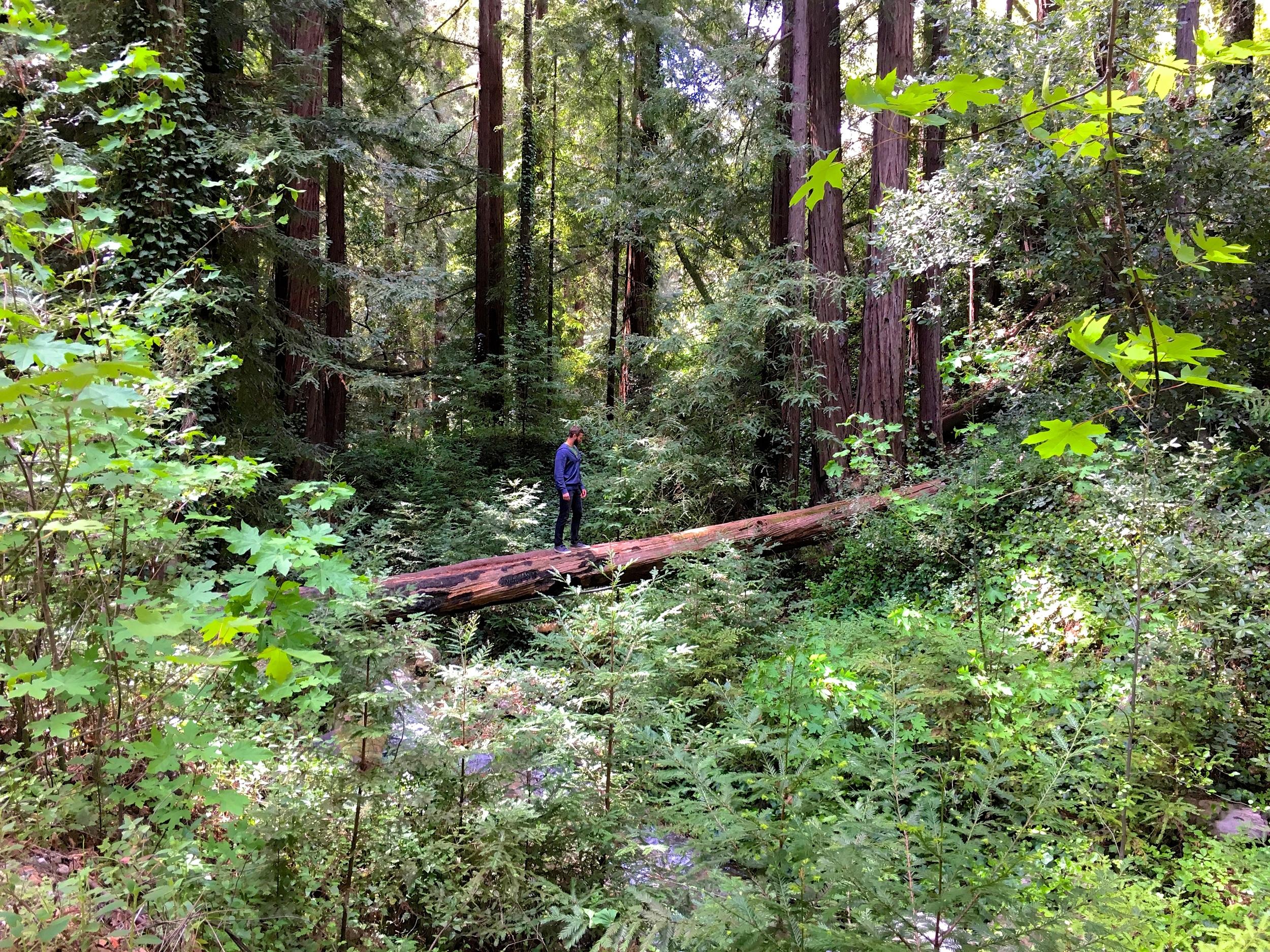 Glen Oaks Big Sur Redwood Forest