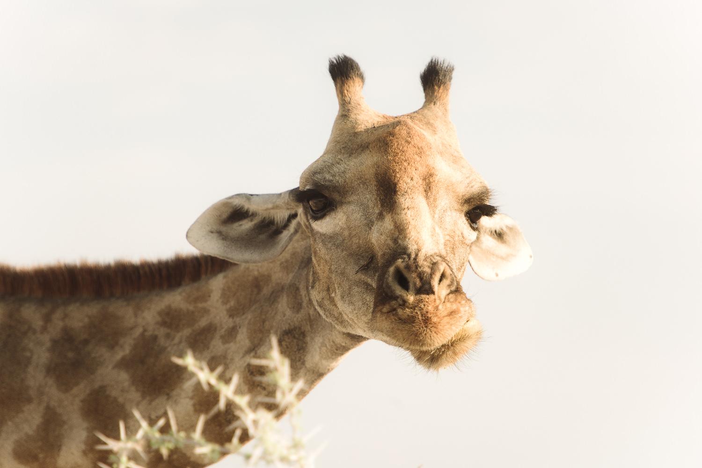 Namibiablog-21.jpg