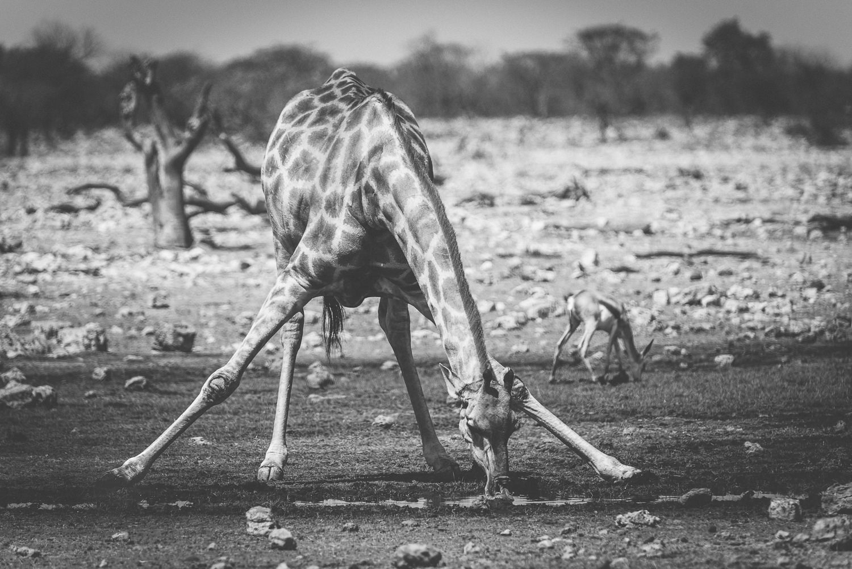 Namibiablog-22.jpg