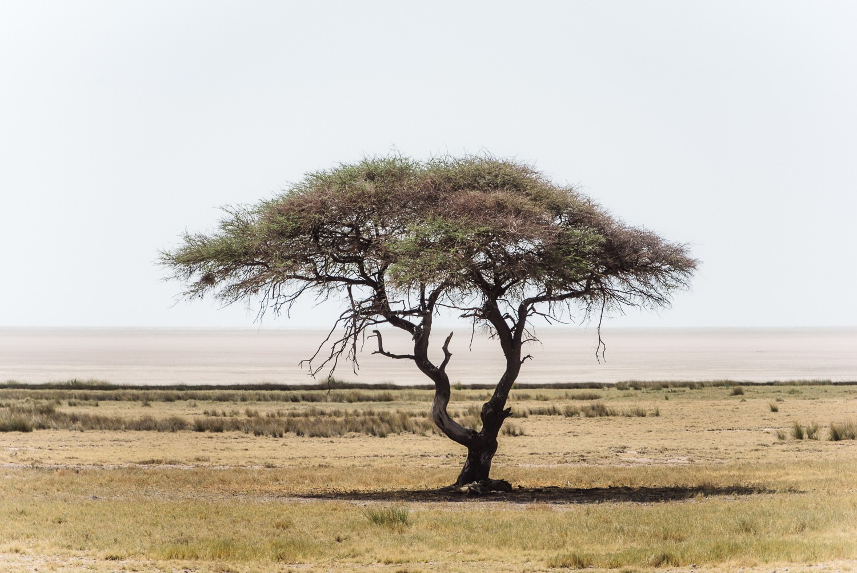 Namibiablog-25.jpg