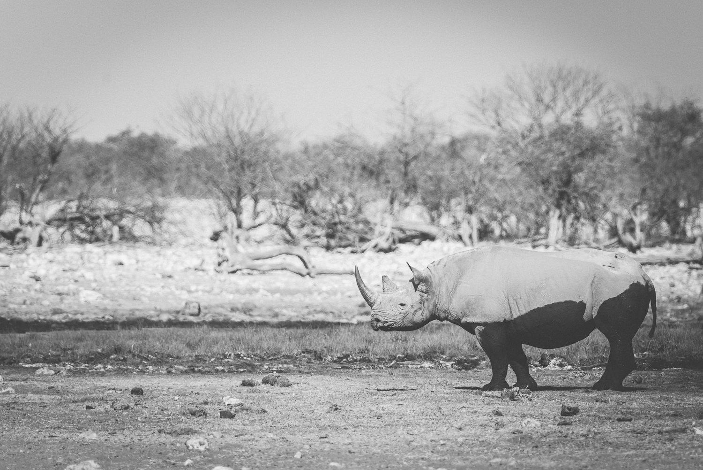 Namibiablog-35.jpg