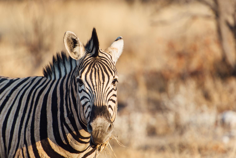 Namibiablog-38.jpg