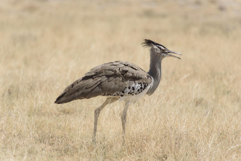 Namibiablog-36.jpg