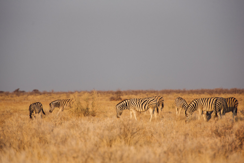 Namibiablog-39.jpg