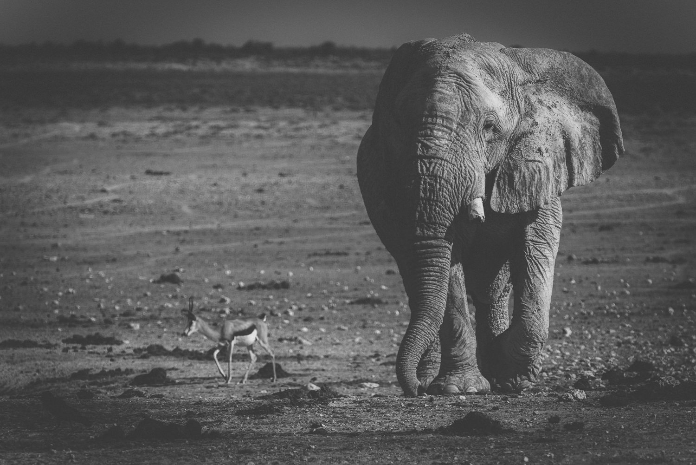 Namibiablog-41.jpg