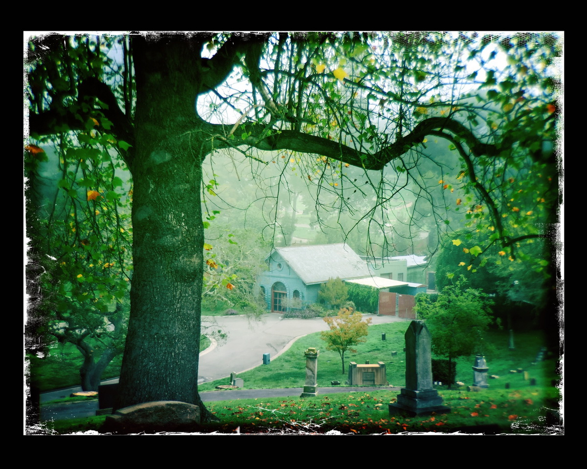 "Tami DeSellier ""Tree and House Mountain View Cemetery"""