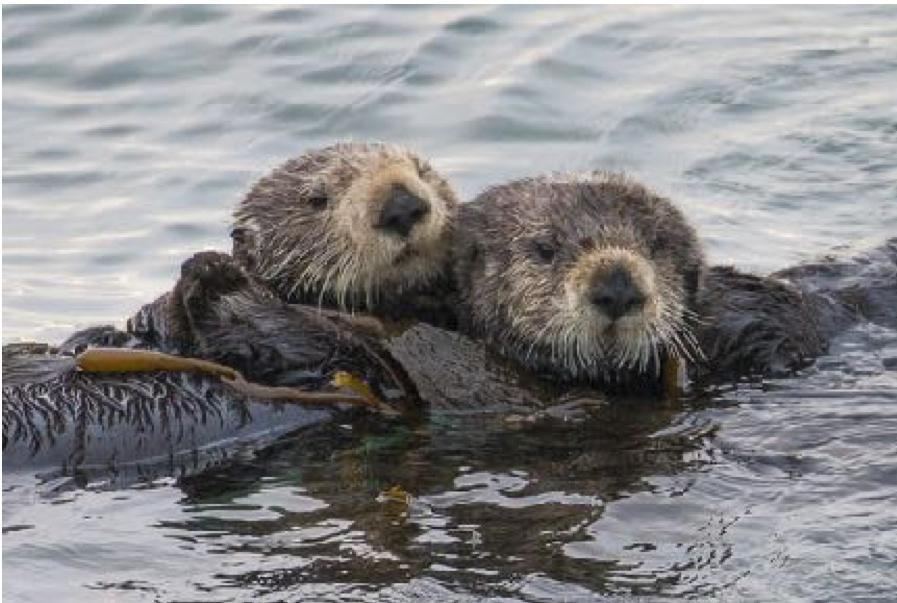 Wildlife Photography by Elaine Miller-Bond