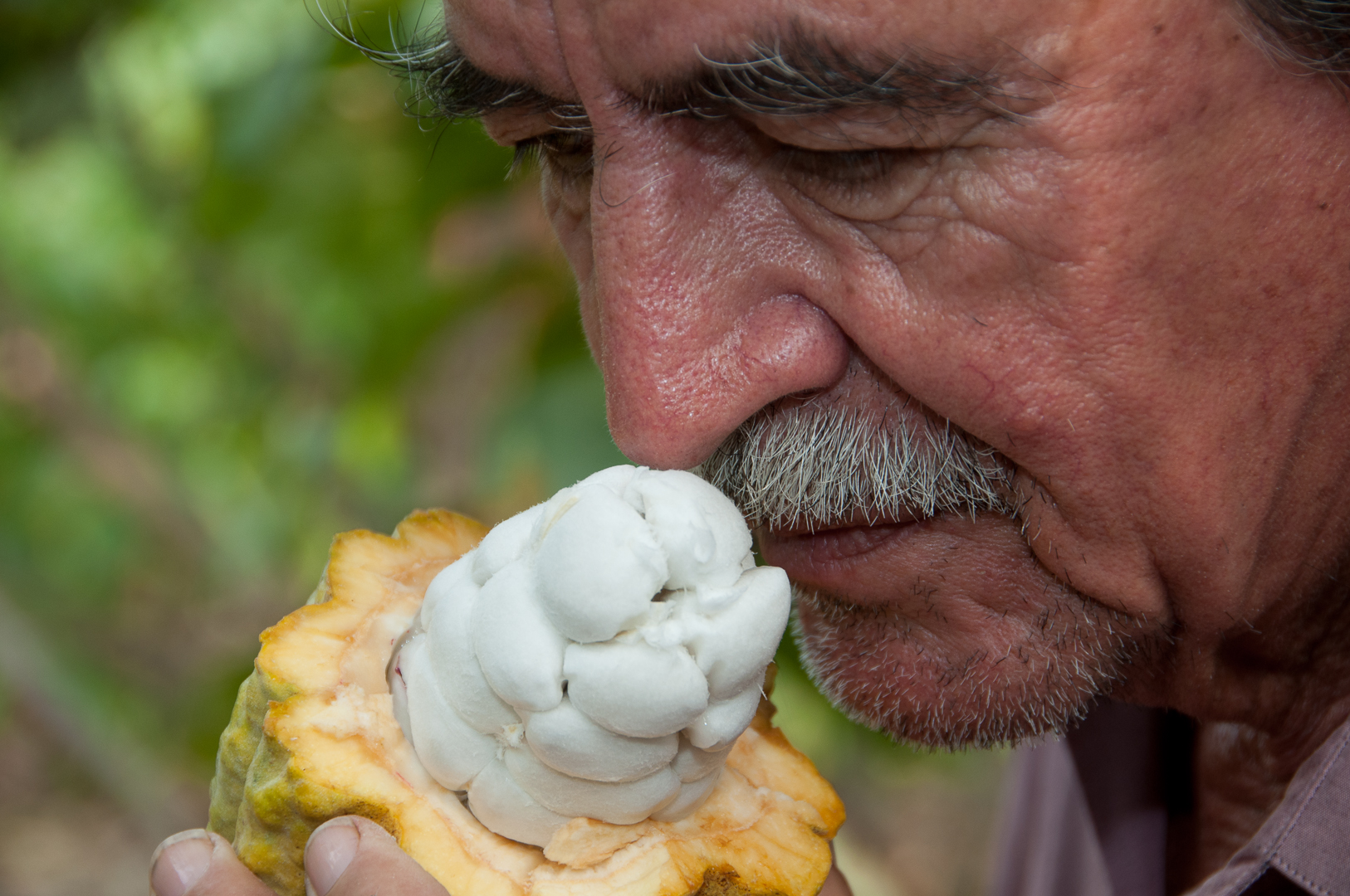 The president of the local cocoa farmers' group outside of Guayaquil, Ecuador, smelling the fresh fruit from a cacao pod