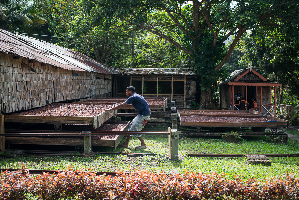 At plantation Fond Doux, cacao beans dry in the sun in these giant racks. When it rains, workers slide the racks back under cover to protect the beans. Photo by Jenny Sathngam