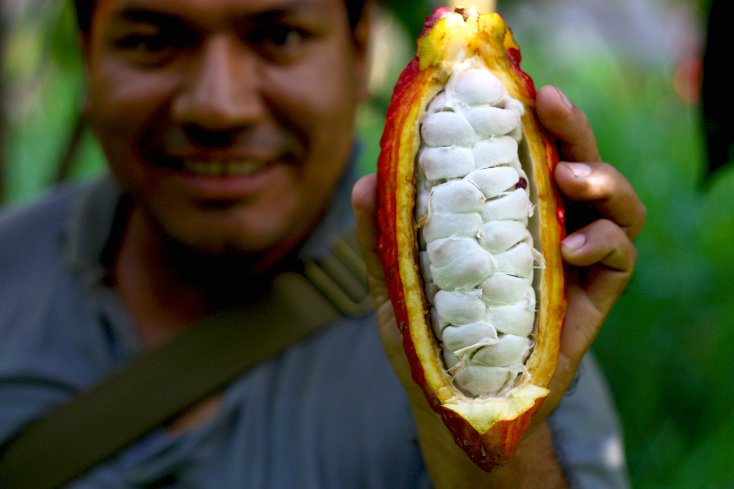 Aldo, a Peruvian cocoa technician who was employed by the TCHO USAID grant