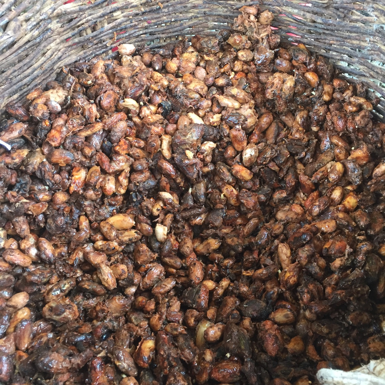 Beans infected with witches' broom being fermented, photo by Baiani Chocolate