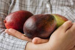 mangos in hands.jpg