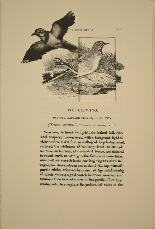 The Lapwing (Maria Temple)