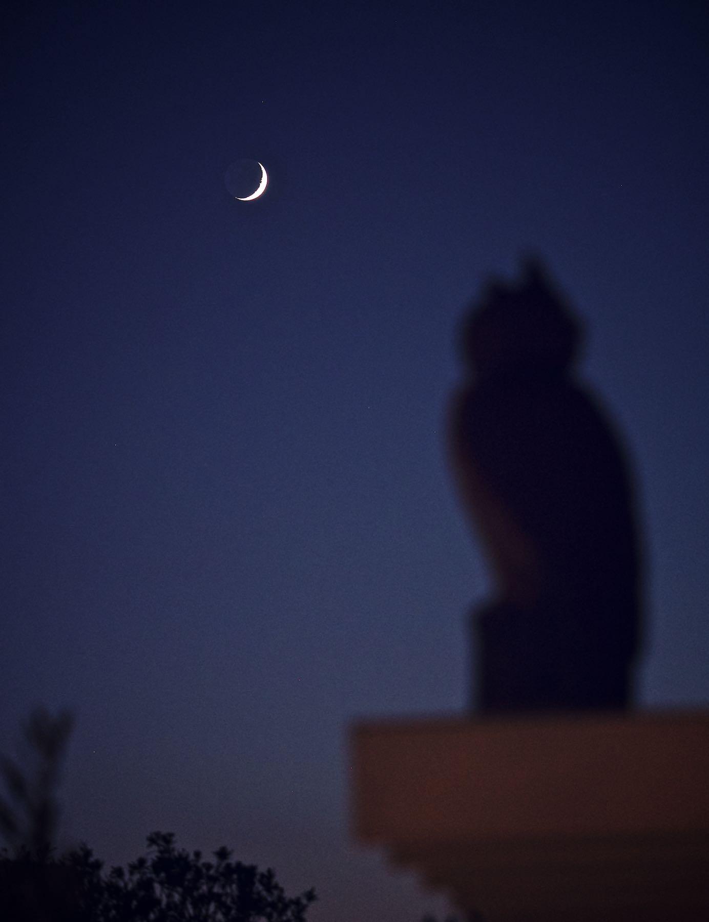 Moonwatching