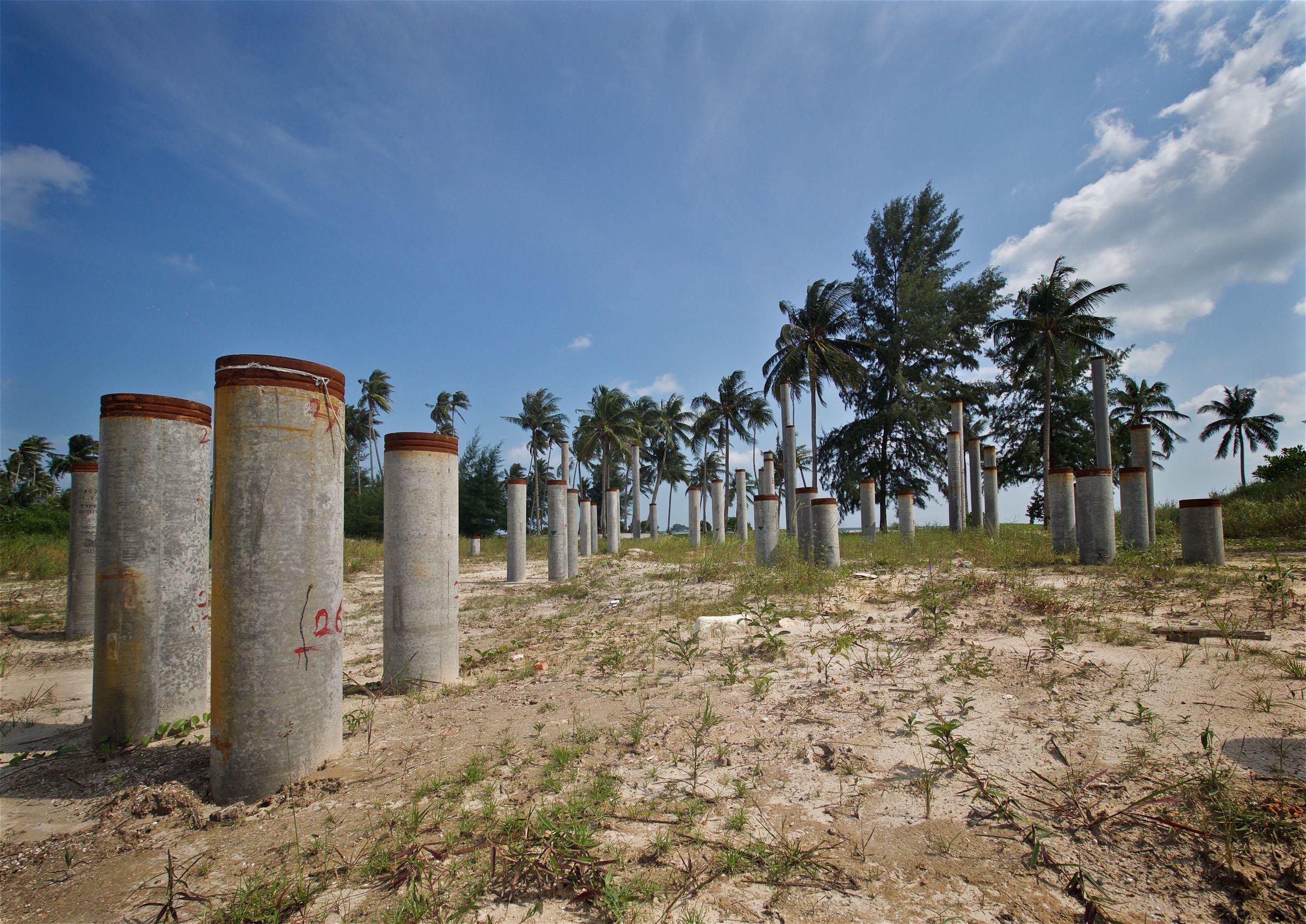 Human vs Natural Palm Trees