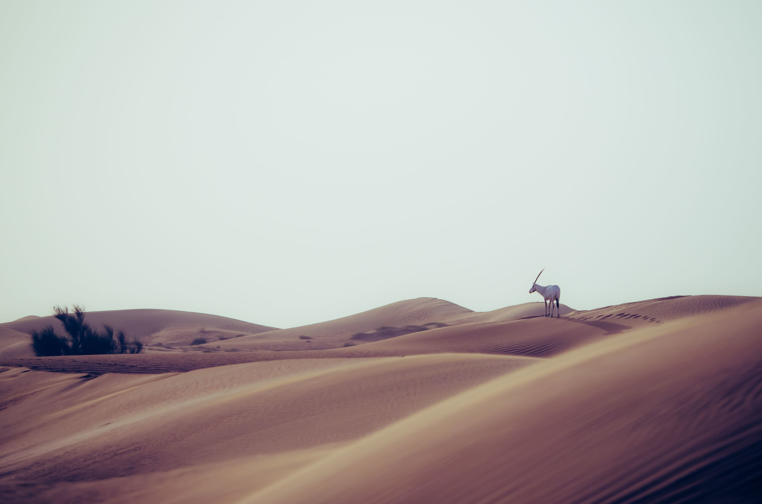 Oryx Tracks