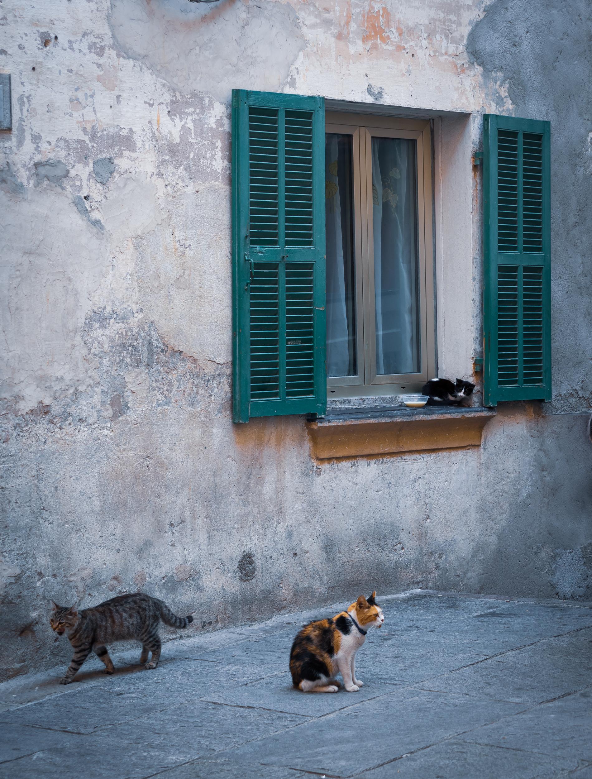 Cat Convent