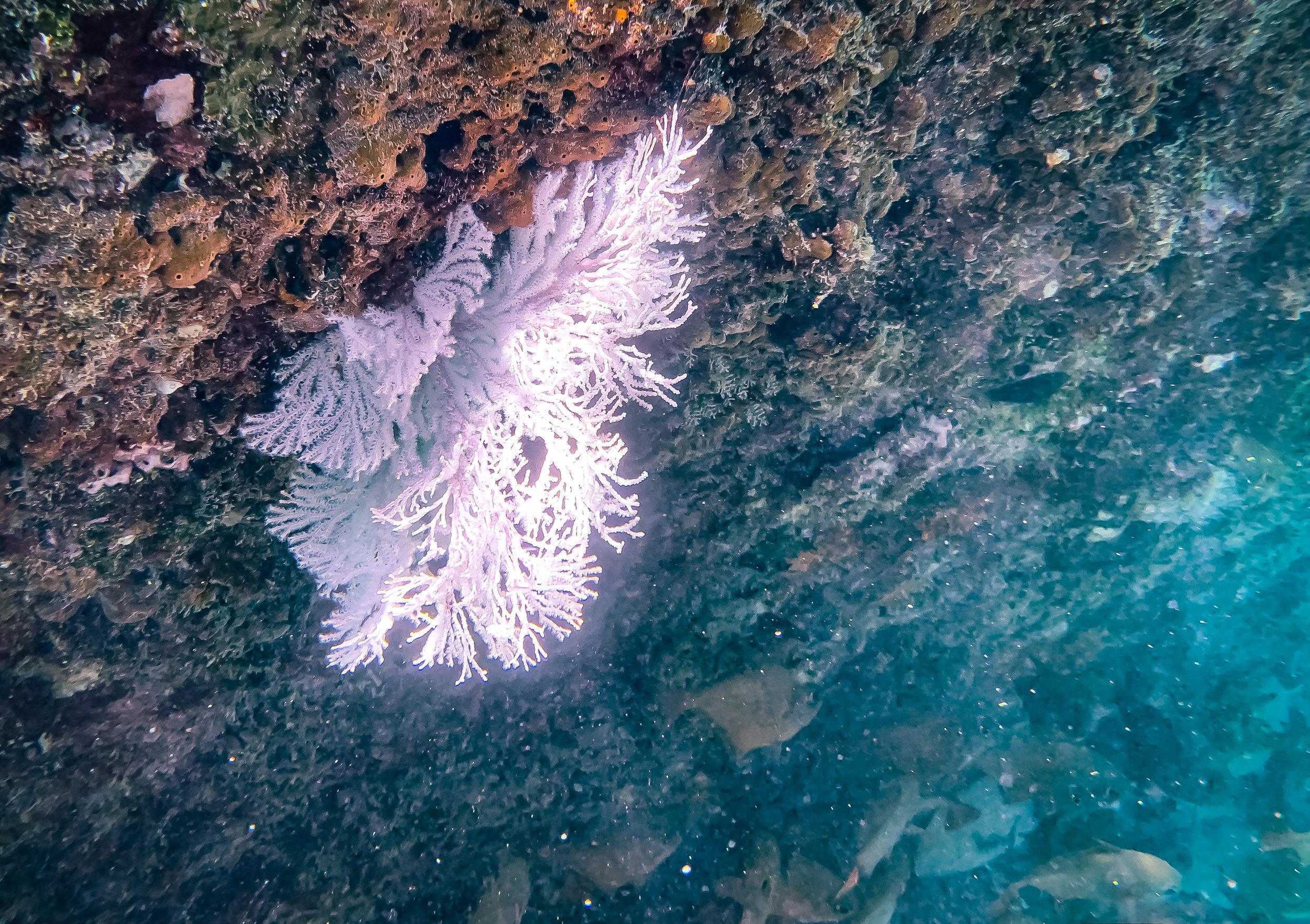 Marine Flora