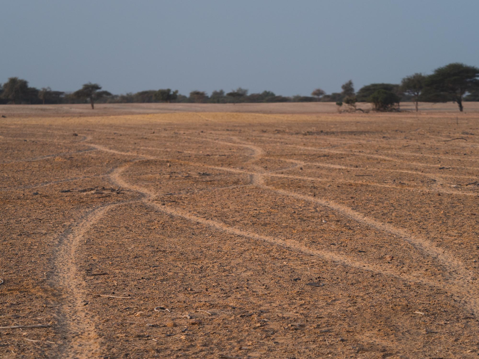 Car Tracks?
