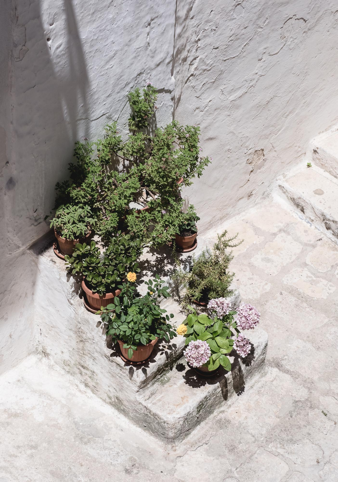 Plant Stairs