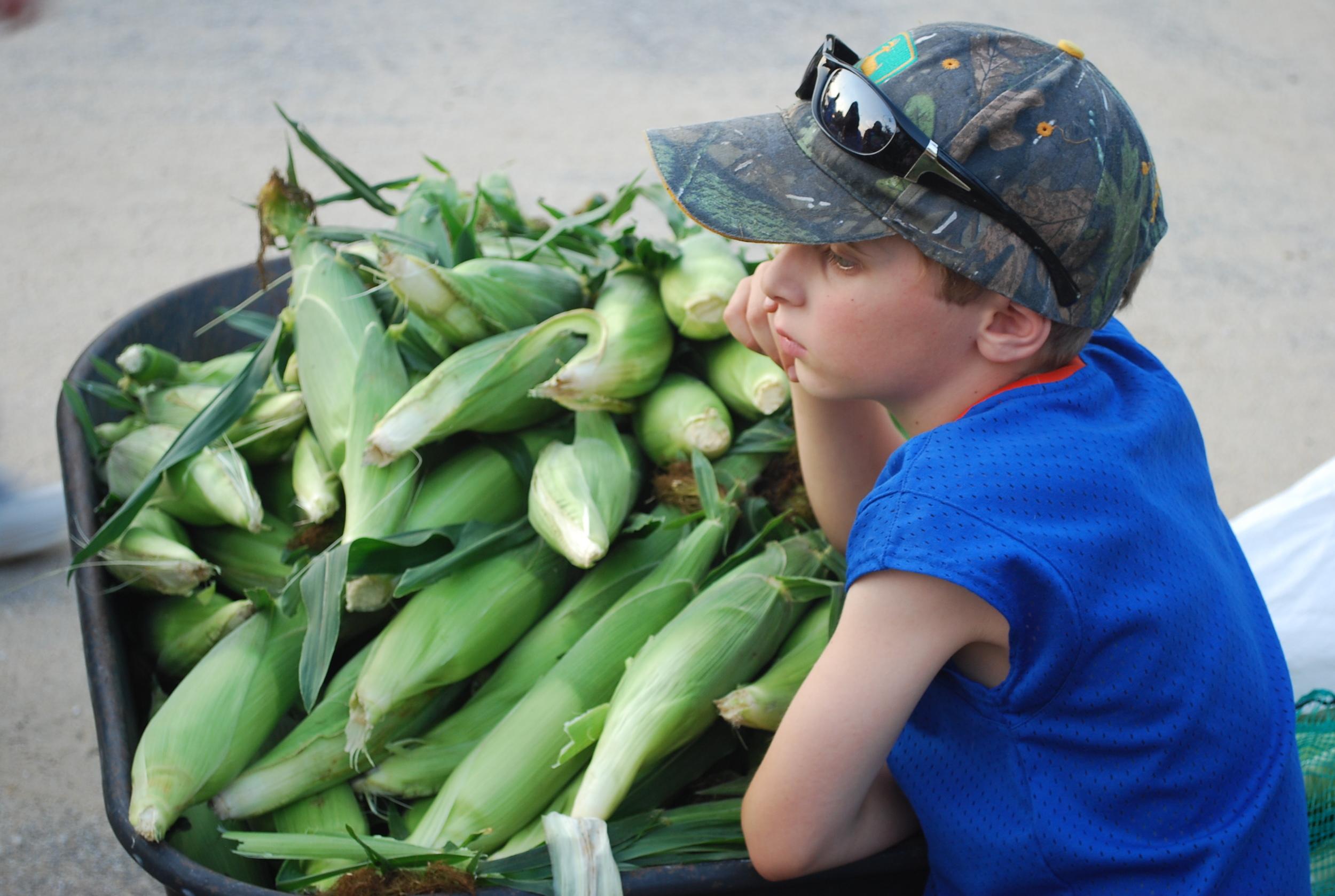 Piles of corn