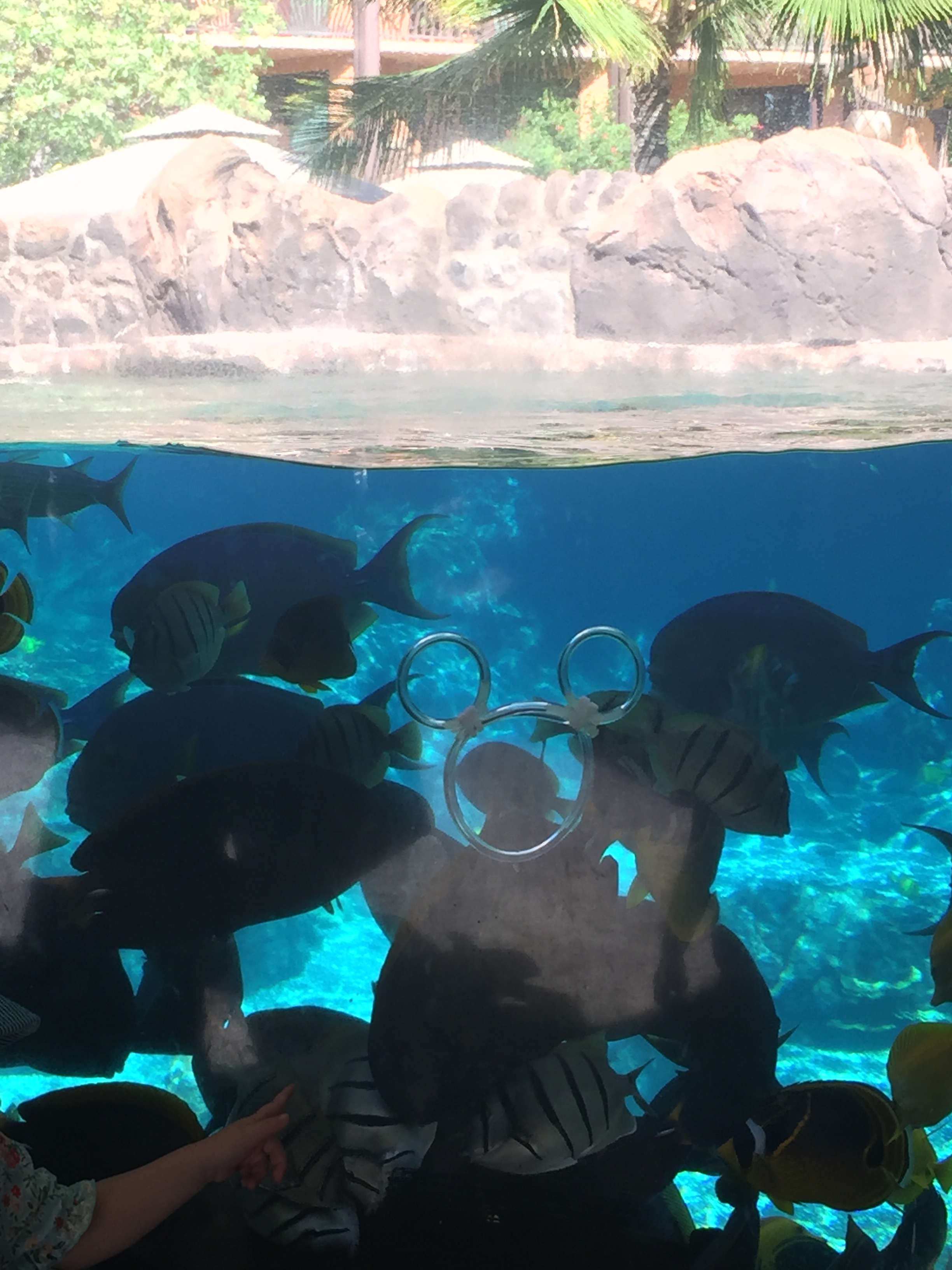We found a hidden Mickey in the snorkeling cove!