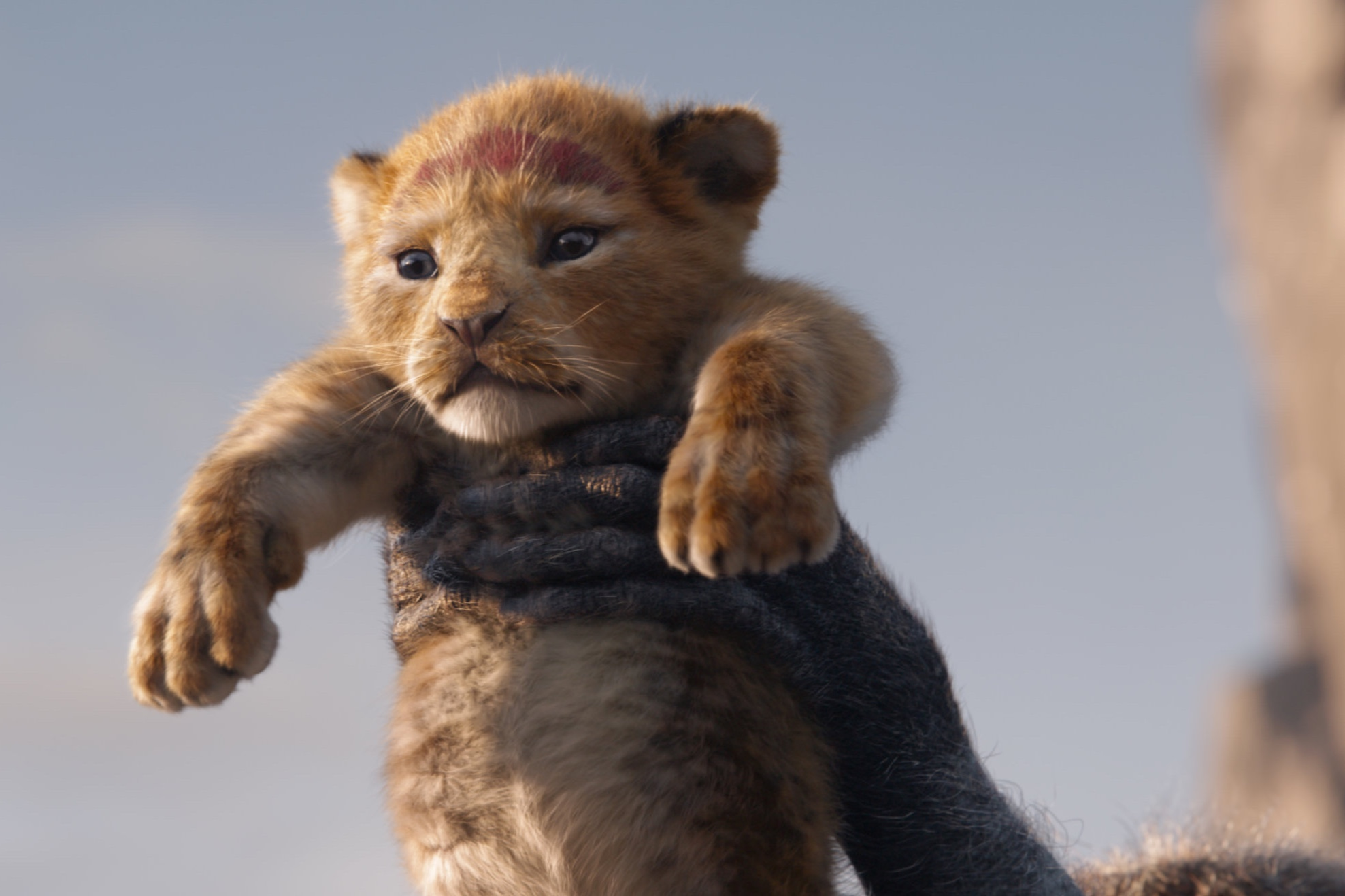 Baby Simba. I just can't take the cuteness.