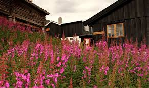 Lyng in abundance in the mountains during fall creating a palate of color.  Heather