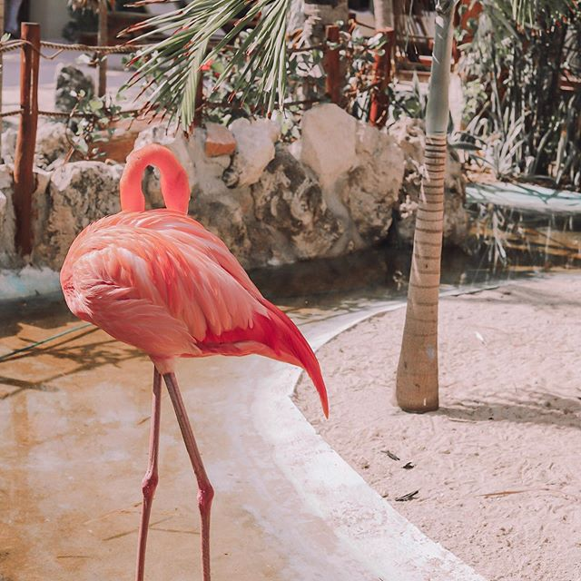 I just want to hide from this gloomy weather too flamingo .... same 😭 • • • #stopraining #photography #mexicopics #flamingo #instagood #risingtidesociety #paradise #carribeancruise #nature