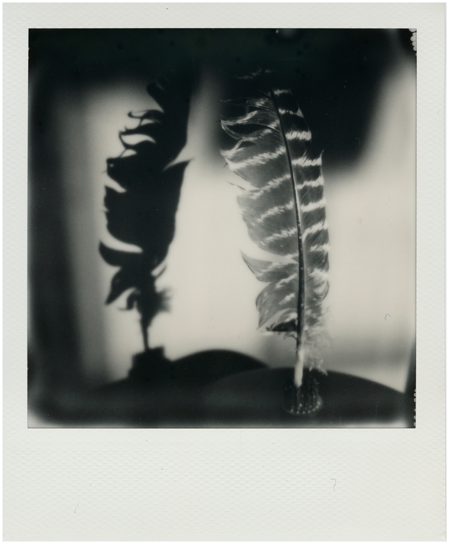 Sx-70 black and white film, indoor, tripod