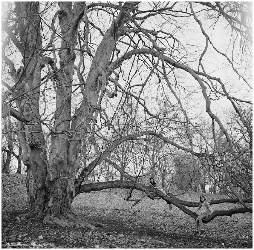 This film image is of my favorite tree in the Arboretium... we didn't make it there this past trip, but, I promise Tino.... Next time! (Mircrocord Camera 2014)