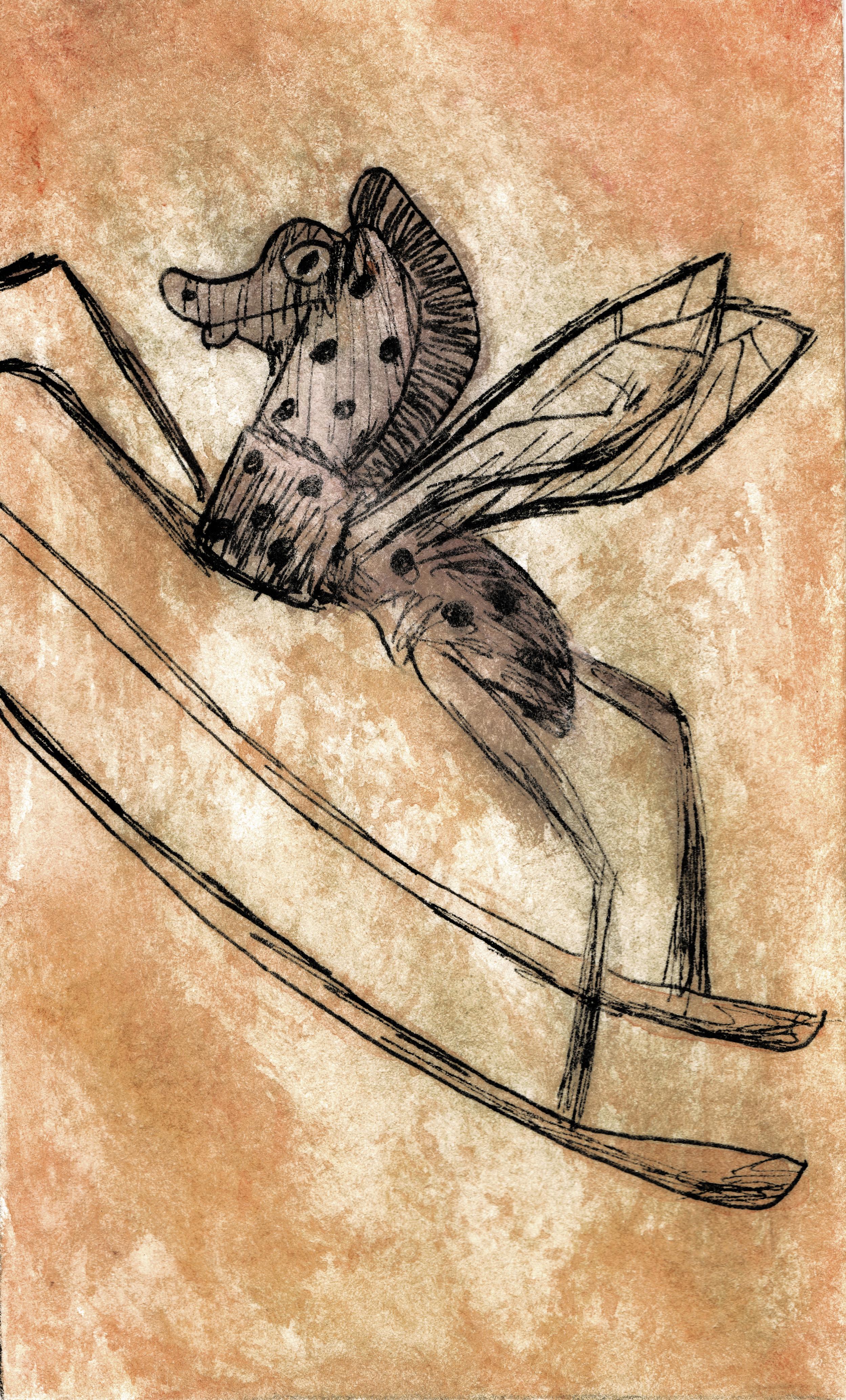 Rocking Horse Fly.jpg