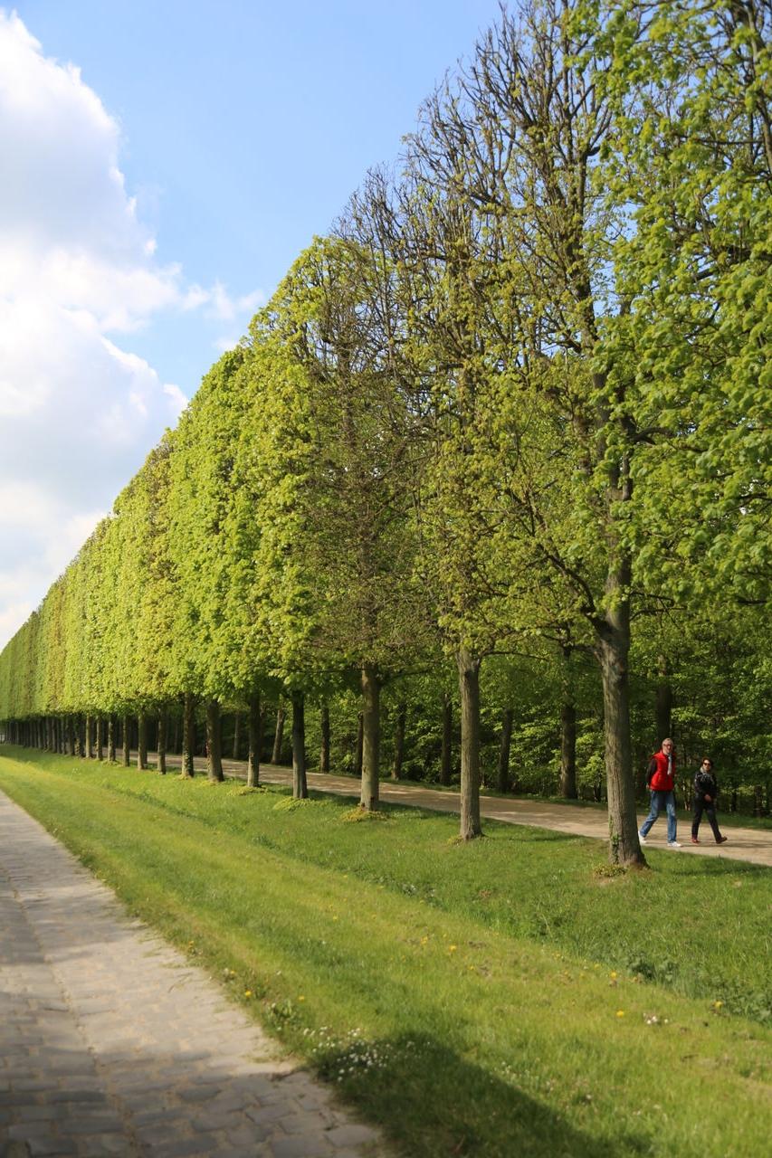 Versailles, 2014