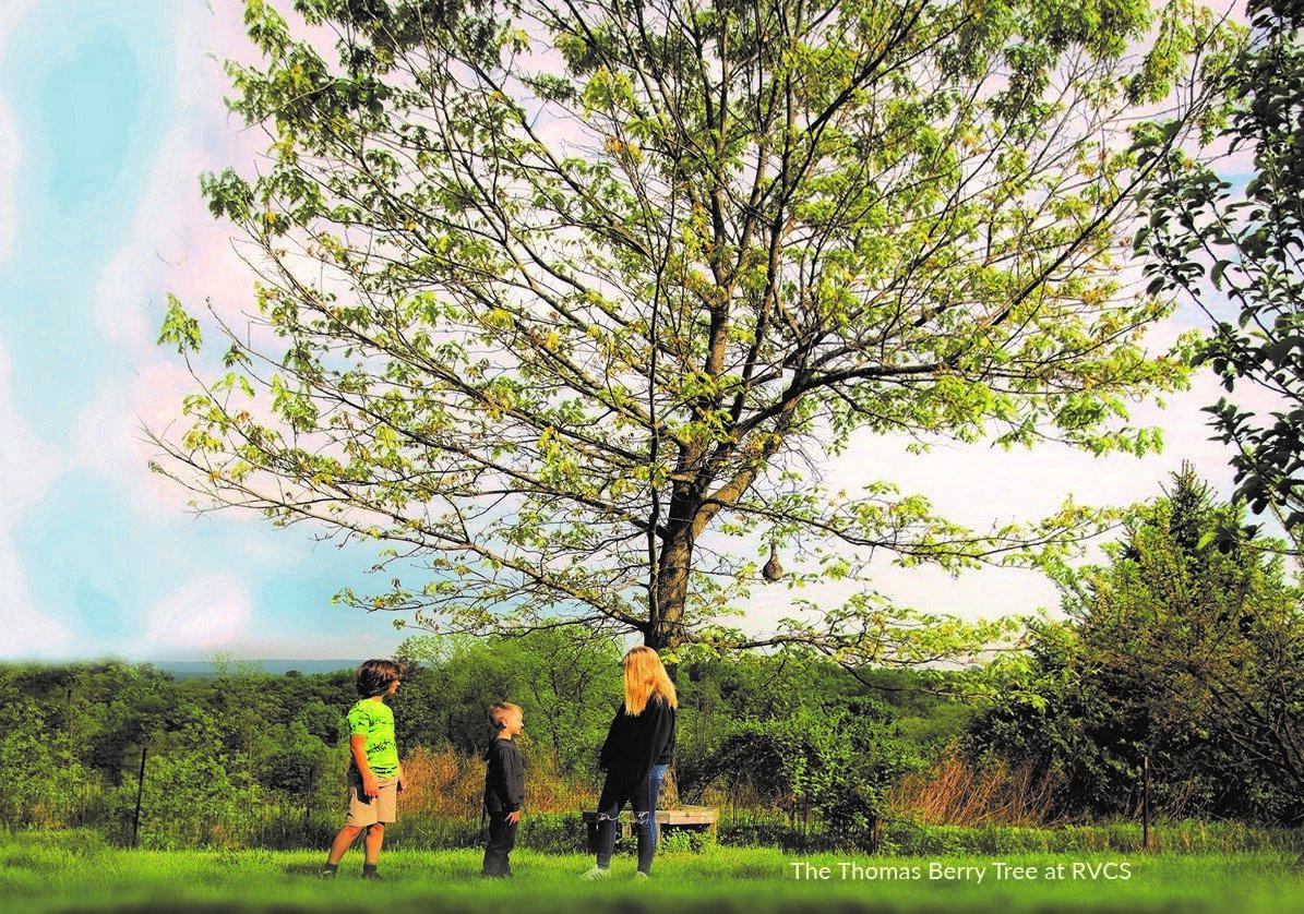 Oak cropped.jpg