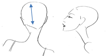 Vertical Parting  This section runs from the centre front hairline to the centre of the nape.